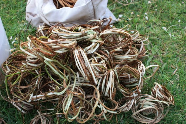 Basket Weaving Using Vines : Split english ivy twining baskets sharon kallis