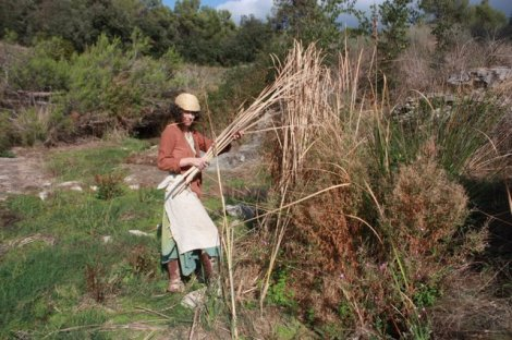 gathering  some of the dead cattails and bullrush from the dry river bed