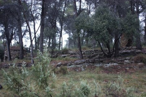 the northern forest, as documented in 2010 with barraca sculpture in background...
